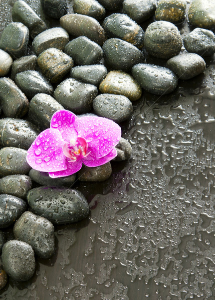 Purple-orchid-rocks-and-water-droplets